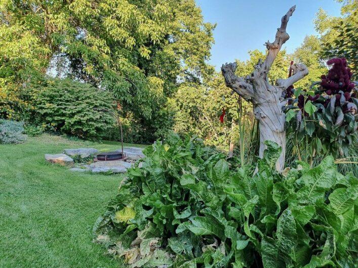 Wiese und Pflanzen im Schaugarten