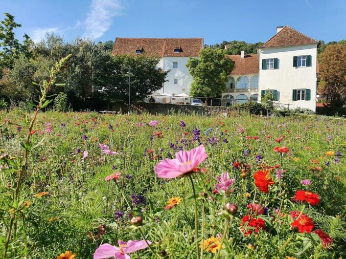 Blick über die Blumenwiese auf Schloss Hartberg